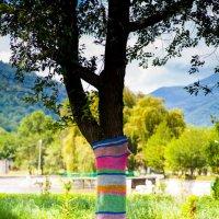 Свитер для дерева :: Александр Мосс