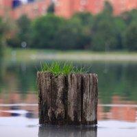 Столбик на воде) :: Любомир Дужак