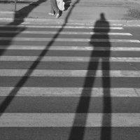 Полосатая тень :: Сергей Черепанов