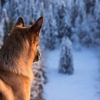 зимняя сказка :: Irina Shutova