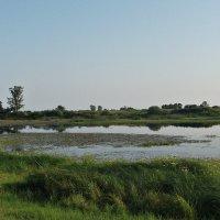 Лебяжье озеро :: Валерия