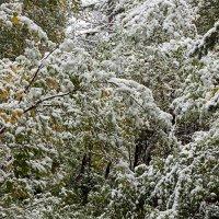 Первый снег :: Михаил