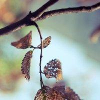 дырявые листья :: Дмитрий Барабанщиков