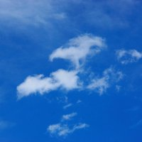 Белый феникс. :: Никита Тихонов