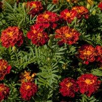 Что видят цветы? :: Ксения Беляева