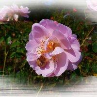 О дружбе розы и улитки :: Nina Yudicheva