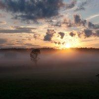 Туман на солнце :: Владимир Миронов