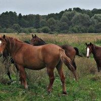 Семья лошадок :: Валерия