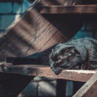 кот на ступеньке :: Ольга Перевалова