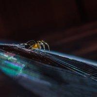 Янтарный паук :: Владимир Шамота