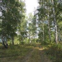 Дорога в лесу :: Yasnji