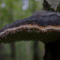 лес :: andrew585 585