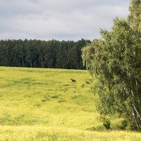 Мгновение уходящего лета ... :: Андрей Зайцев