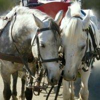 лошадки :: Валерия Яскович