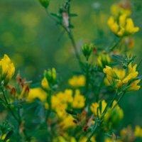 полевые растения :: Света Кондрашова