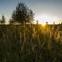 Последние дни августа :: Юля Колосова