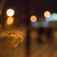 Ягоды зимой :: Станислав Гераськин
