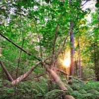 Брянский лес :: Артем Тимофеев