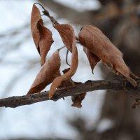 Поздняя осень :: нина  смалькова