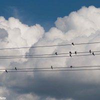 Музыка облаков. :: Руслан Веселов