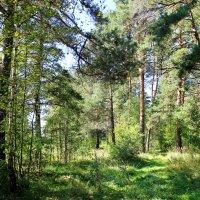 В лесу. :: Иван