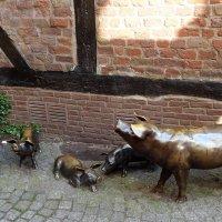 Buxtehude (серия).  Свиньи :: Nina Yudicheva