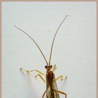 Усатое насекомое :: Aнна Зарубина