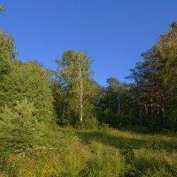 Лесной уголок :: Анатолий Иргл