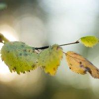 Успеть поймать осень :: Natalia Petrenko