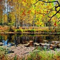 Золотая осень :: Валерий Толмачев