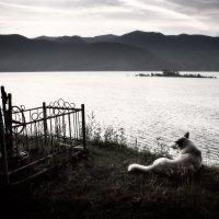 Пёс. :: Slava Sh