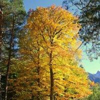 Золотая осень.. :: Клара