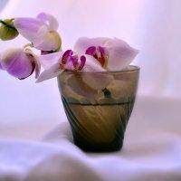 Орхидея :: Валерий Лазарев