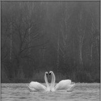 Лебединая пара :: Михаил Цегалко
