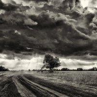 Уж небо осенью дышало :: Дмитрий Конев