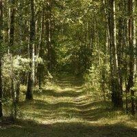 Августовские лесные аллеи ... :: Игорь Малахов