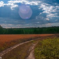 Дорога из леса :: Руслан Веселов