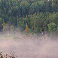 Млечною мягкостью манит туман. Может, он - правда, а может - обман. :: Ольга Cоломатина