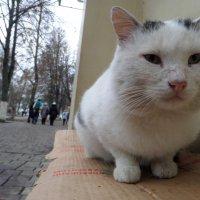 Уличный мурлыка кот :: Татьяна