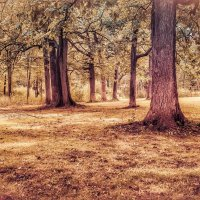 В.лесу. :: Gene Brumer
