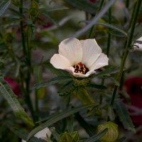 Цветочные джунгли :: Владимир Кроливец