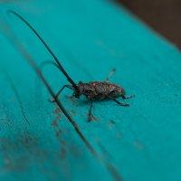 Тренируюсь в макро- жук :: Ольга Долбилина