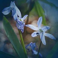 Первоцветы :: Yulia Deimos
