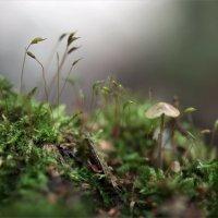 в макро лесу :: Эльмира Суворова