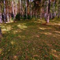Осень наступила , осторожно осыпая поляну своим золотом . :: Мила Бовкун