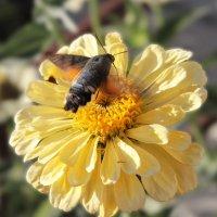 Бабочки и цветы :: TATYANA PODYMA