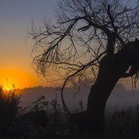 Пробуждение солнца :: Сергей Корнев