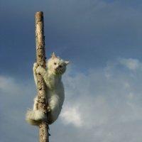 Кот в дозоре :: Ирина Останина