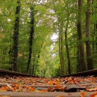 Дорога в парке :: Alexander Andronik