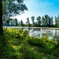 Лето ушло :: Света Кондрашова